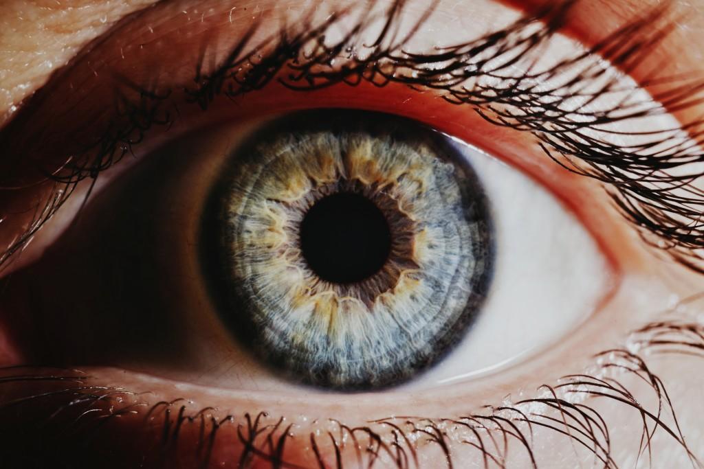 Het oog